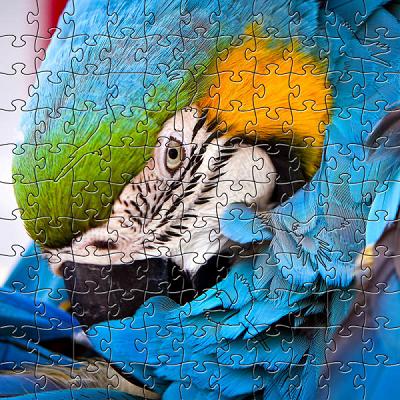 Blue Parrot Large Puzzle by Zen Art & Design