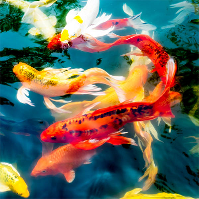 Koi - Small Puzzle by Zen