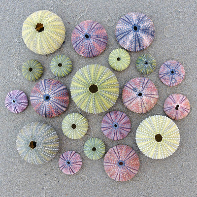 Sea Urchins Small Puzzle by Zen